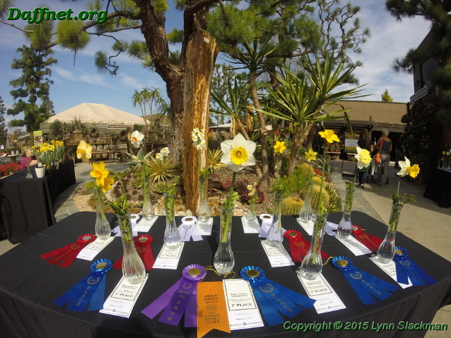 Top Awards At Roger S Gardens Daffodil Show