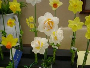 Daffodil Show, Barco, NC