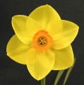 Best Bloom in Show & Best Div 2 Twicer