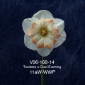 V96-168-14 Twotees x Cool Evening 11aW-WWP