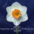 V99-52-1 Fragrant Rose x (Bryce Canyon x N7100DuBose) 2W-YPP