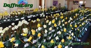 Balyney Daffodil Show 070913a