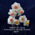 V02-57-10 8W-P(m)