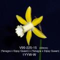 V95-225-15 1YYW-W(m)