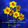 V96-33-17 7Y-R