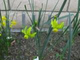 06055-1   5G-GOO seedling