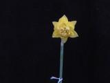 'Baldock' x jonquil seedling 4Y-Y