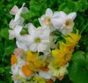 Mini Bouquet Close-up, 1