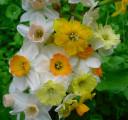 Mini Bouquet Close-up, 2