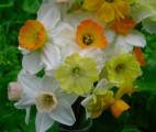 Mini Bouquet Close-up, 3