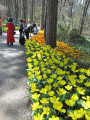 There were mass plantings of several spring bulbs along the walkways at Wildwood Botanical Gardens.