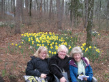 Lois Van Wie, with her Daughters Barbara and Carol sitting in from of a large planting of the Daffodil 'Delibes' at Wildwood Botanical Gardens.