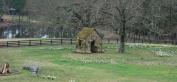 More photos of the Daffodil house at P Allen Smiths Farm.