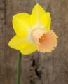 Seedling 2YYW-P, Elizabeth x Filoli