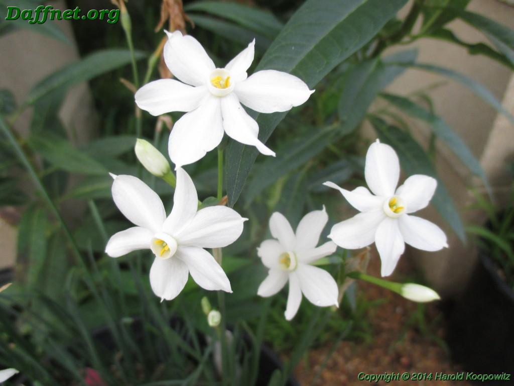 More On Autumn Flowers Daffnet
