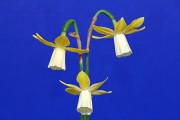 A nice blue ribbon 3 stem entry of Lavalier, exhibited by Lynn Ladd.
