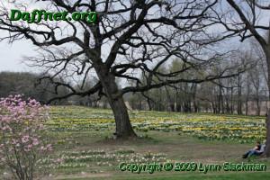 Oakwood in bloom during 2009