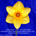 Gold Ribbon Winner Amity, Oregon Daffodil Festival- 2015