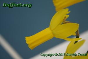 Rapture best bloom