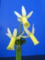 The Mini White Ribbon Winner - Snipe, Exhibited by Naomi Liggett