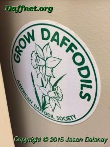 Grow daffodils