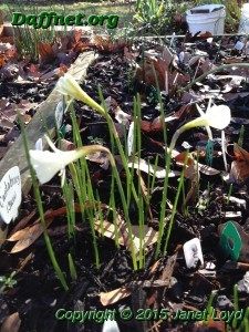 December blooms in Georgia