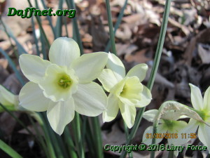 January blooms 2016 008