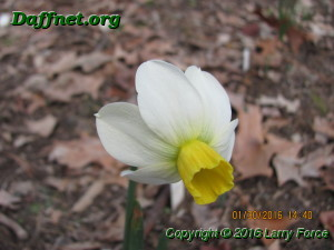 January blooms 2016 012