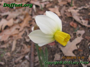 January blooms 2016 014