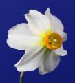 Best Historic Bloom Ribbon Winner, Livermore 2016