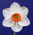 Intermediate Best Bloom Ribbon Winner