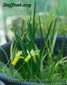 Kb micro mini 6w y seedling opening edited 1