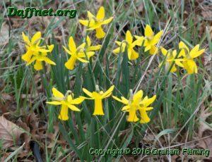 Pot of 6y y seedling flowering