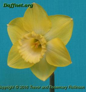 NI Reserve Champion bloom Luminosity