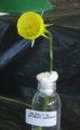 Keira bulb