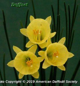 N.-hedraeanthus-luteolentus-2.jpg