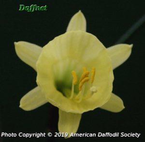 N.-hedraeanthus-luteolentus-3.jpg