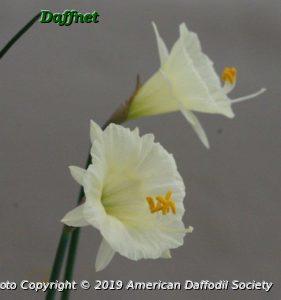 N.-hedraeanthus-luteolentus-diff.-forms.....jpg