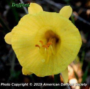 N.-hedraeanthus-luteolentus-full-face..jpg