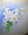 Narcissus pöeticus