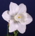 Youth Best Bloom Ribbon Winner