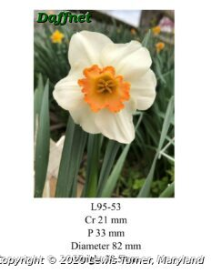 Blooming 2020-Seedling L95-53